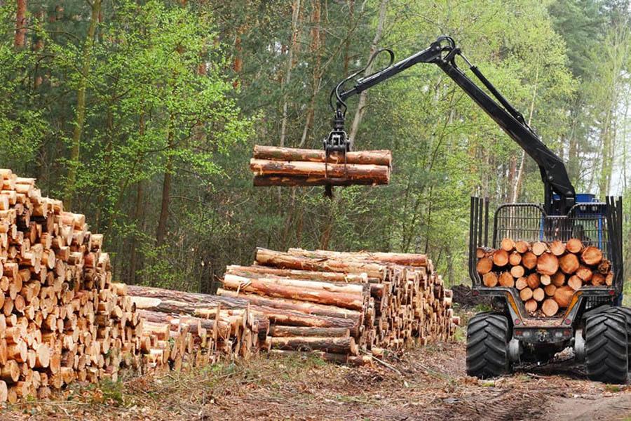 Timber EUTR shutterstock_137691920